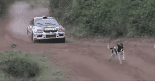 Pris au milieu d'une course de voitures, ce chien a eu BEAUCOUP de chance ! (vidéo)