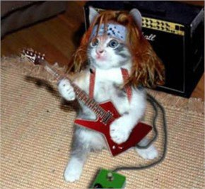 Funny Animals Playing Guitar