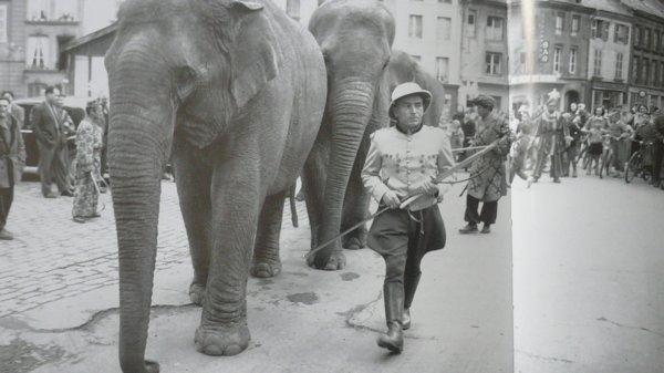 et voici comme promis l'infiminent grand ...Les Eléphants ...