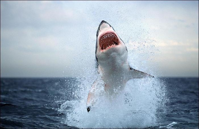 Le jour ou il n'y aura plus de requins sur Terre