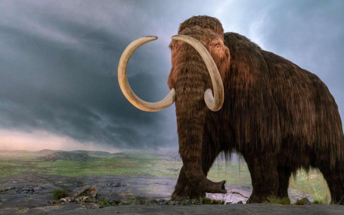 Redonner vie au mammouth laineux pour lutter contre le réchauffement climatique ?
