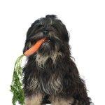 Natural Pet Health