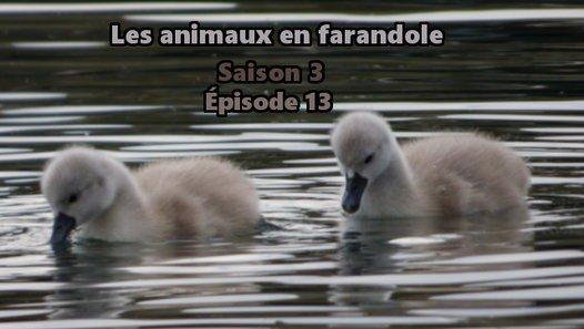 Les animaux en farandole: saison 3: épisode 13 - Vidéo dailymotion