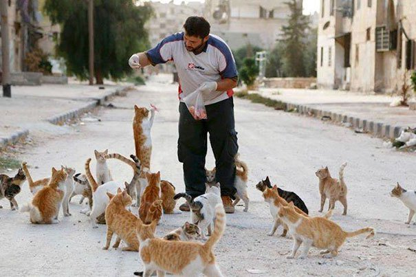 People Are Fleeing War-Torn Aleppo But This Man Is Staying To Care For Abandoned Cats - News