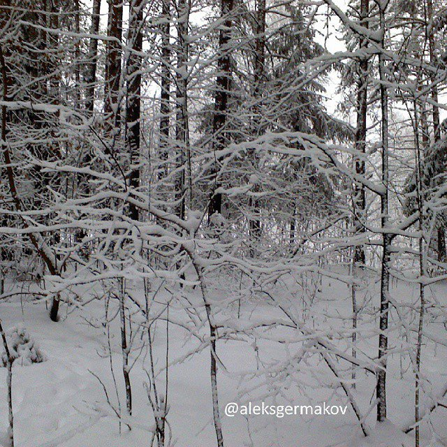 In Russia, such a beautiful winter forest
