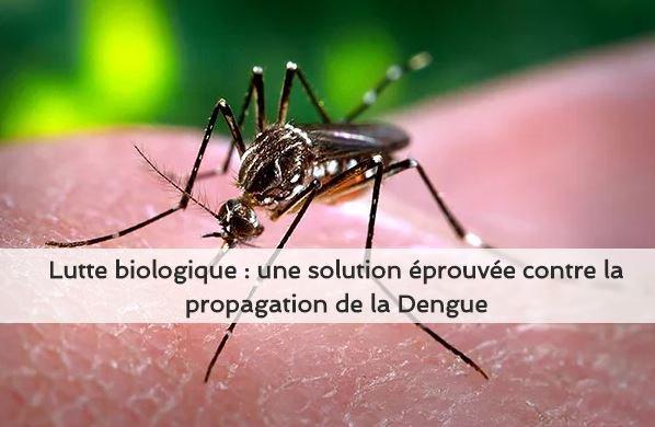 Accueil vigilance moustiques