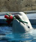 ma passion les dauphin
