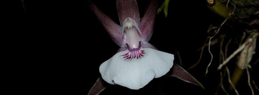 jardin-botanique orchidées Guyane