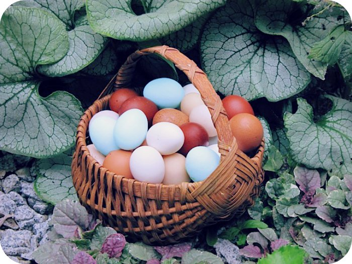 Do not Place All Eggs in the Same Basket. - Daily Poetry and Stories Portal   Easy Branches