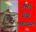 DANGER: CANARY FREEDOM - ★ GIALLI ♂♀ LUTINI ★