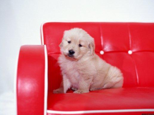 Funny cute beautiful dogs wallpapers desktop Wallpapers 2418
