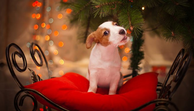 Un animal n'est pas un cadeau de Noël