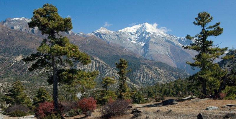 Annapurna Royal Trekking | Annapurna Royal Trekking Package