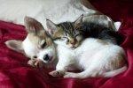 Comme chien et chat .....