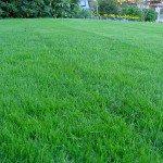 G&H  Landscaping - lawn repair/seeding