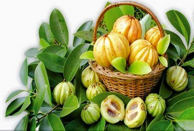 Does Garcinia Cambogia Extract Suppress Appetite And Burn Fat?. ~ Fat Burning