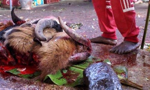 Pétition : Pour l'arrêt des atroces sacrifices animaux lors de la dite Fête de Tamoul sur votre île !