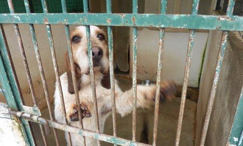 Pétition : Justice pour les chiens et chats tués à la Spa de Pau de 2010 à 2013