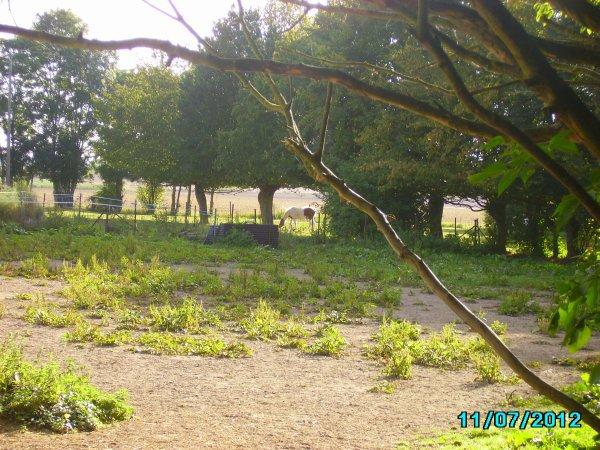 Noisette et Quéliquo , 2 chevaux ^^