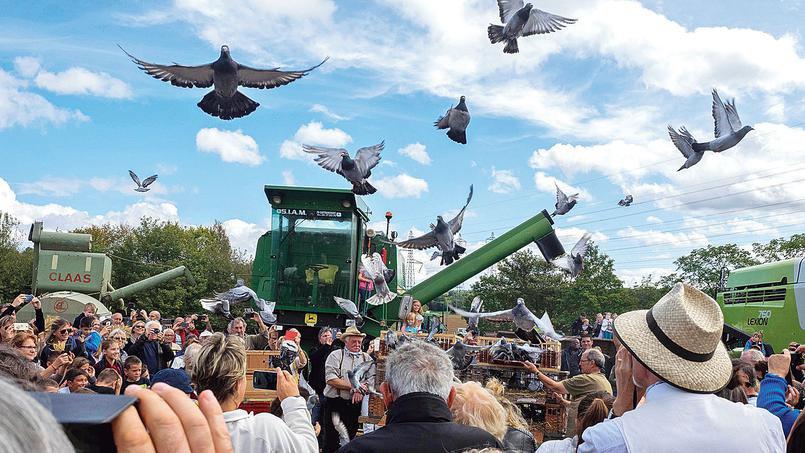 Les secrets des pigeons voyageurs d'élite