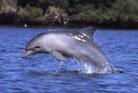 Saving dolphins could be key healing oceans