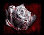 Quand l'amour conduit au meurtre