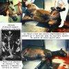 Transport et abattage des chevaux - Blog de lhomme1inhumain - L'inhumanité de l'homme