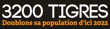 3200 Tigres - Doublons sa population d'ici 2022   WWF