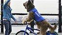 Le chien le plus cool du monde : il sait faire du skate et du vélo !
