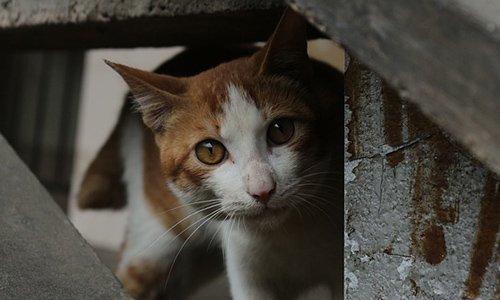 Pétition : Oui à la convention avec 30 millions d'amis pour la stérilisation des chats errants sur la commune