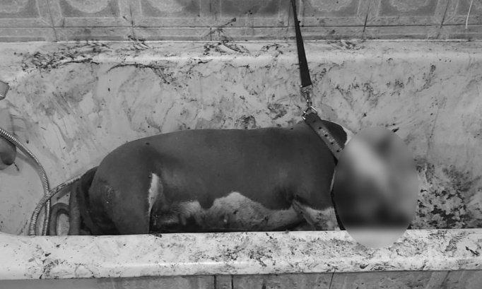 Pétition : Peine maximale contre l'individu ayant attaché et poignardé la chienne INA dans une baignoire à Morsang-sur-Orge