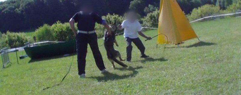 Pétition - Stop au dressage des chiens dits de défense !