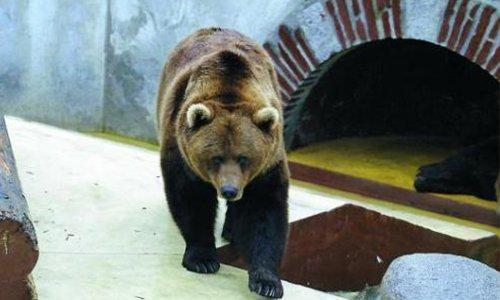 Pétition : Sauvons l'ours de Saint-Lary-Soulan