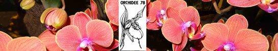 Association pour amateurs et passionnés d'orchidées