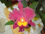 L'ami des orchidées