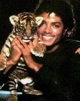 le roi de la pop + un petit bébé tigre ce n est pas bo ca