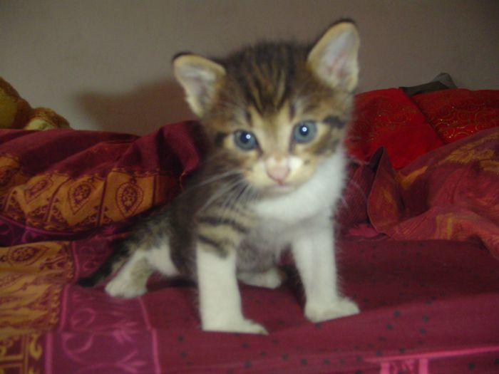el gato^^
