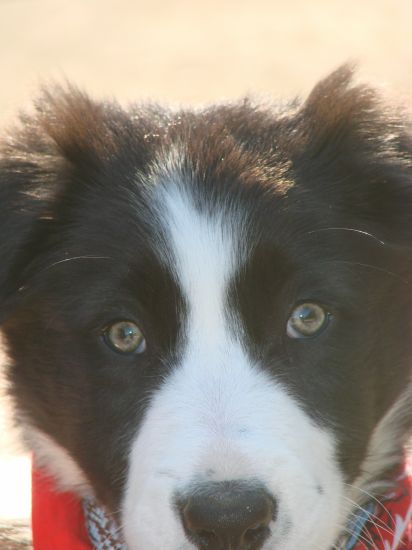 mon petit chien tu est tro bo sur cette photo je t aime tro