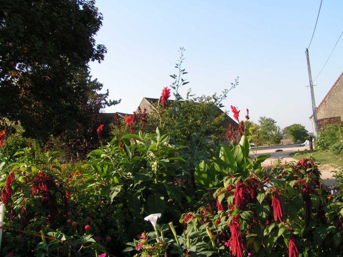 vu sur le jardin