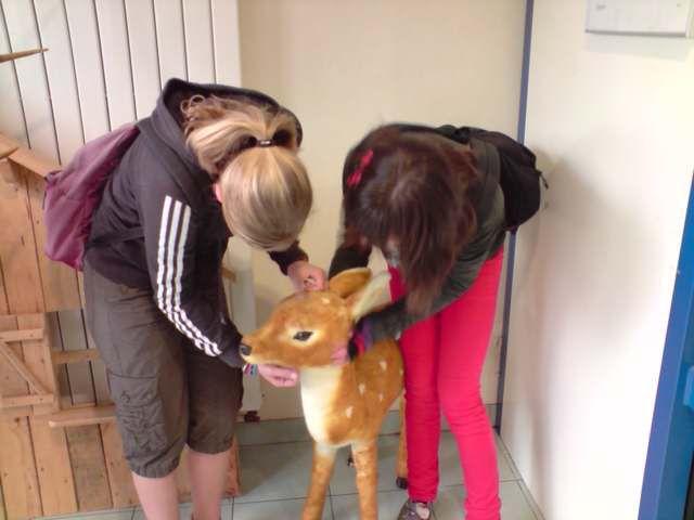 Toutes fan de Bambi ^^