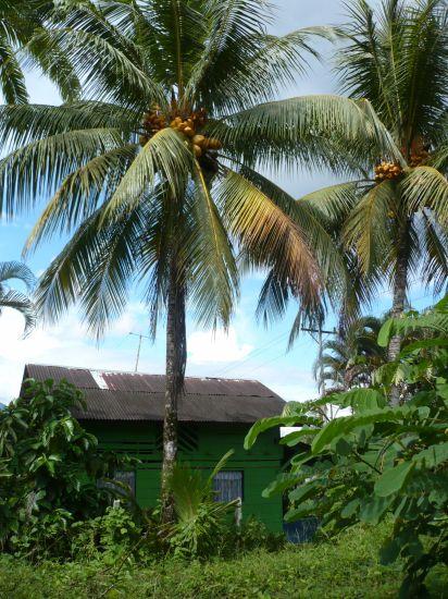 Casa verde, Gamba