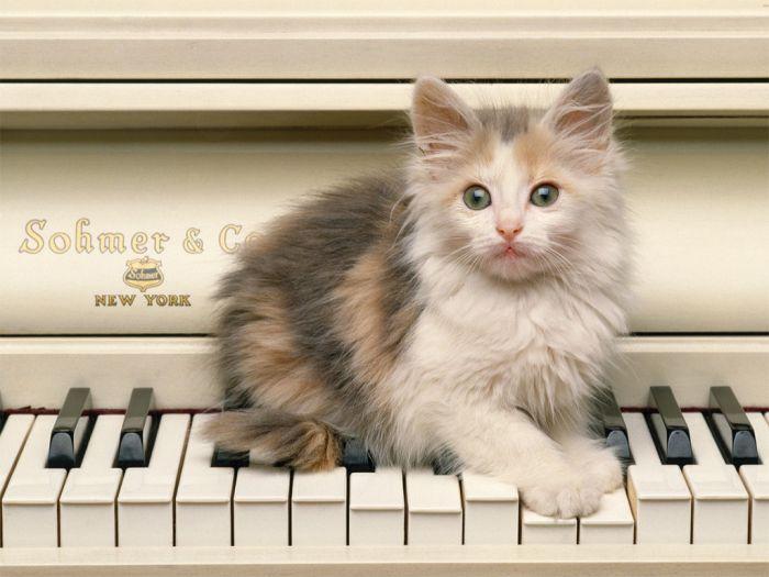 Il joue du piano debout