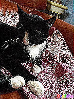 Mon bébé chat (Louna)