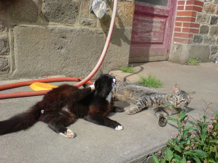 mes chat