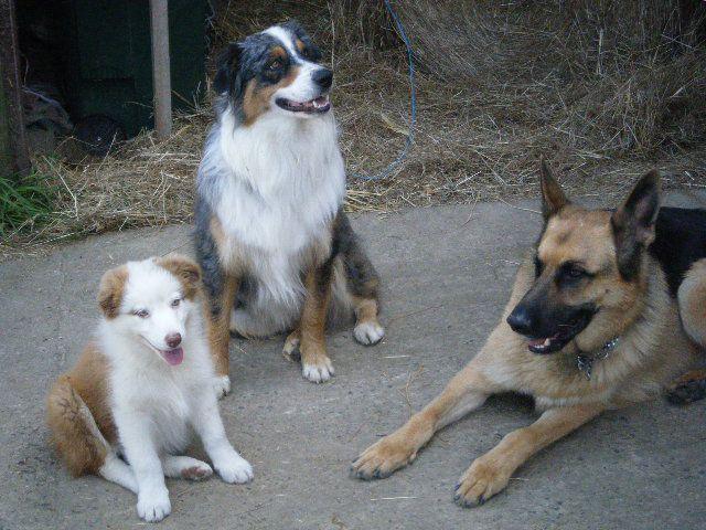 les chiens de la wd