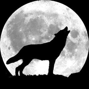 Un loup devant une pleine lune