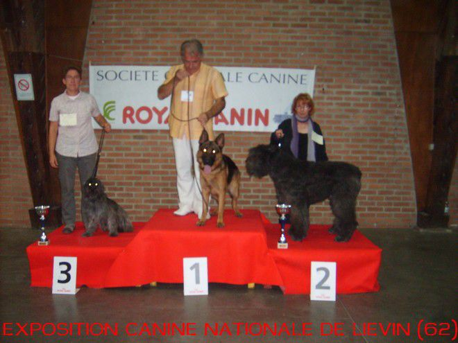 exposition canine nationale de LIEVIN (62)