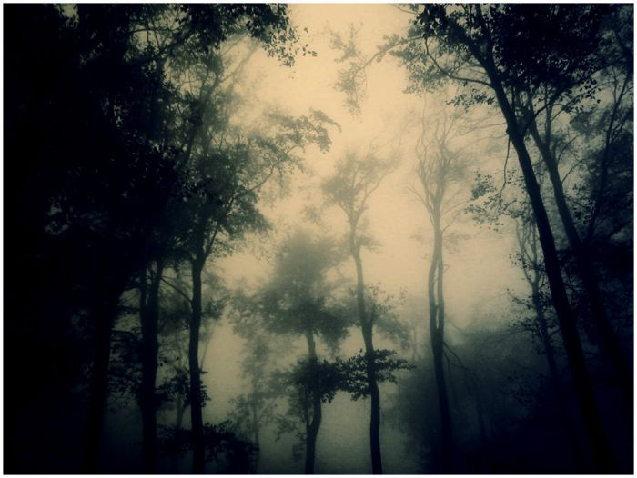 dark forest - by serialkillerstock