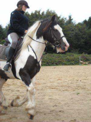 Mon poney et moi