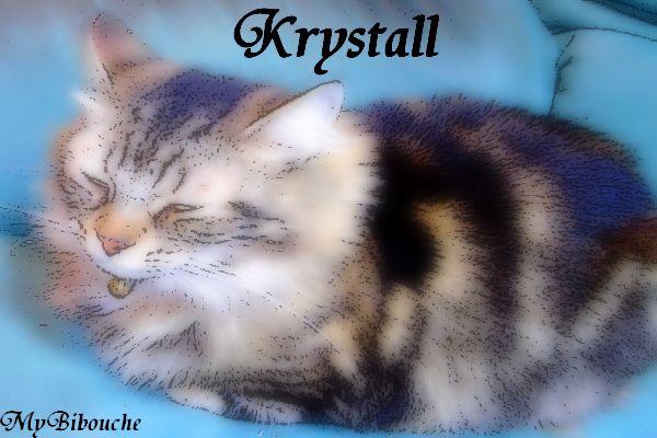 KRYSTALL; MYBIBOUCHE.. UN PETIT ETRE INDISPENSABLE <3